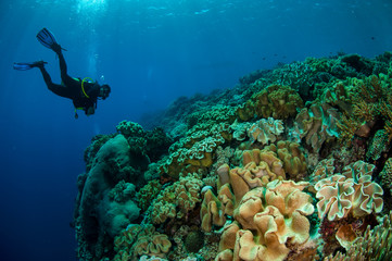 Divers, mushroom leather coral in Banda, Indonesia underwater