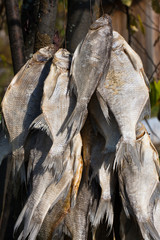 closeup of dried fish
