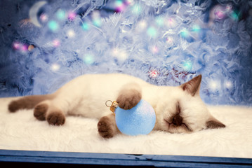 Cute little kitten sleeping near window with frosty christmas pa