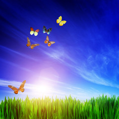 High resolution image of fresh green grass, flying butterflies.