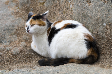 A domestic cat prowling on a rock