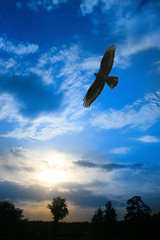 eagle flying in cloudy sky