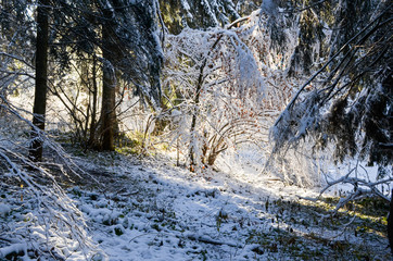 Winter forest with snow on trees and light ethereal