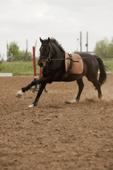 Horse in training