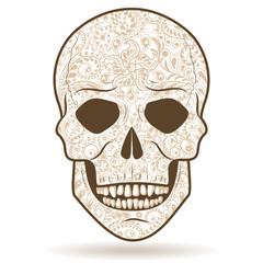 Light-colored patterned human skull
