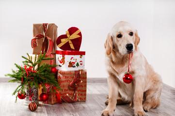 retriever puppy holding a Christmas ball teeth