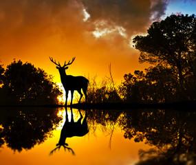 el ciervo entre la maleza del lago