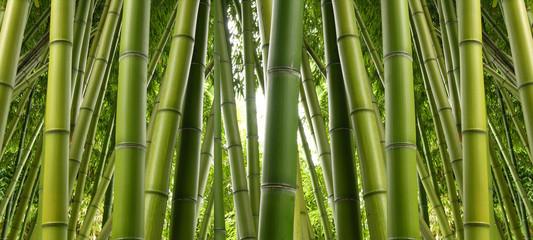 Spoed Foto op Canvas Bamboo Bamboo Jungle