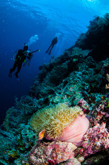 Divers, anemone, clownfish, soft coral in Banda underwater