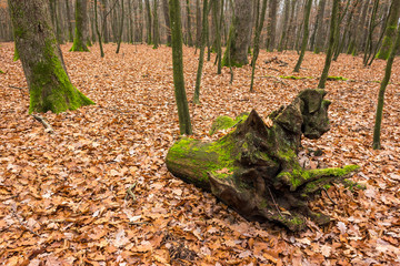 stump in autumn forest on a red foliage