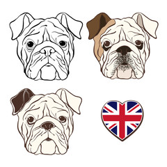 Vector set of  English bulldog's face and  heart flag UK. Hand-d