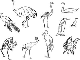 ten bird blak sketches on white