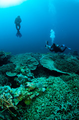 Divers, various hard coral reefs in Banda, Indonesia underwater