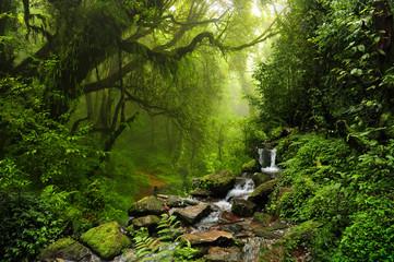 Selva de-Nepal