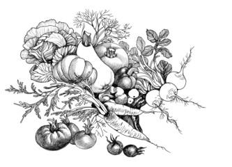 Hand drawn still life of vegetables