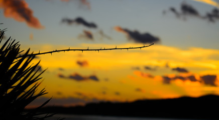 thorn silhouette at sunset
