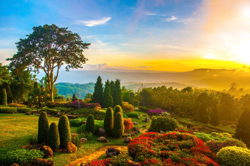 Beautiful garden of colorful flowers on hill with sunrise in the Fototapete