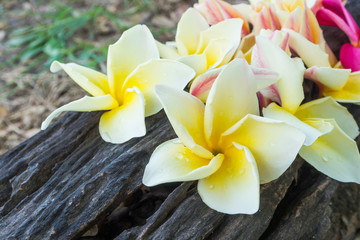 flower on dead wood