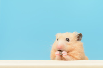 ひまわりの種を食べるハムスター