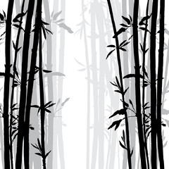 silhouette of bamboo grove