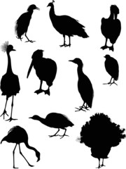 ten black isolated bird silhouettes