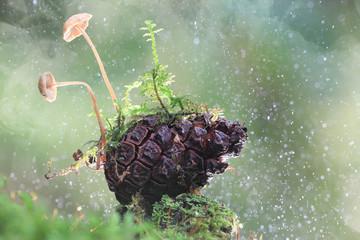 small mushrooms toadstools macro design
