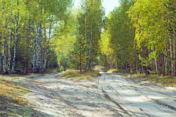 The road in the autumn forest