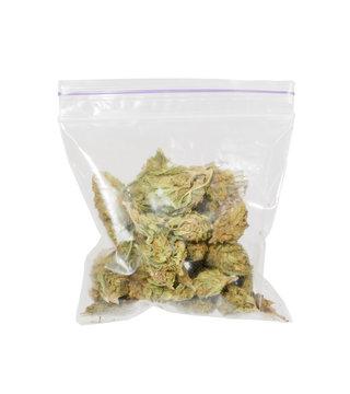 Big plastic bag of medicinal cannabis (marijuana).
