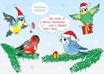 Merry Christmas from vector cartoon style Birds!