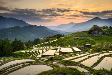 Garden Poster Rice fields Rice Paddies in Kumano, Japan