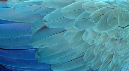Photo sur Toile Les Textures Macaw Feathers