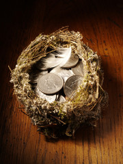 Bird's Nest filled with American currency