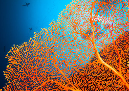 Couple of scuba divers on coral reef