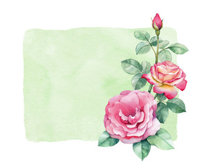 Watercolor illustration of rose flower. Perfect for greeting