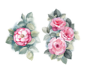 Watercolor illustrations of wild rose flowers