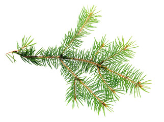 xmas branch of evergreen is isolated on white background