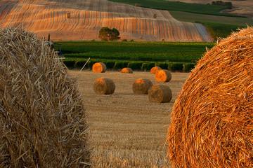 Gray and gold haystacks