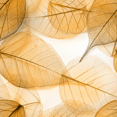 Macro leaves seamless texture
