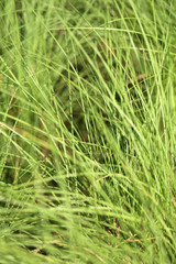 photo green grass