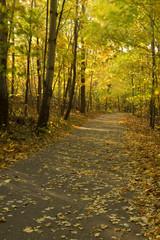 Trail In Breezy Autumn Woods