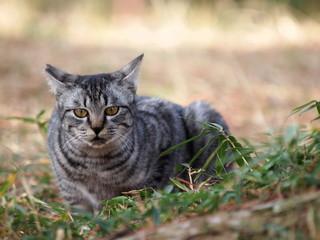 シャープな印象の猫