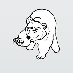 Vector illustration, polar bear