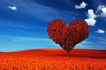 Heart shape tree with red leaves on red flower field. Love