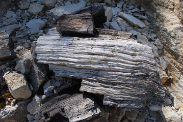 Petrified Forest - Bulgaria