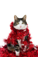 Looking cat covered with Christmas garlands