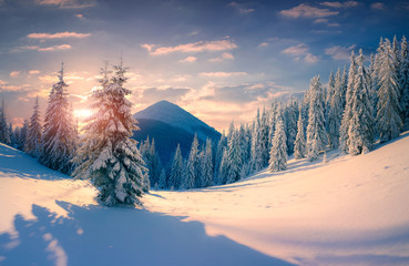 Poster Prune Beautiful winter sunrise with snow covered trees in the mountain