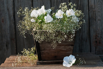 Fresh garden white petunia bouquet  on wooden table