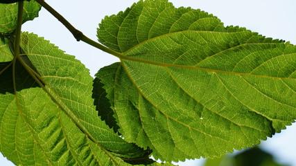 Buscar fotos arboles frutales de hoja perenne for Arboles para veredas hojas perennes