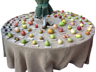 Fruits collection on the table