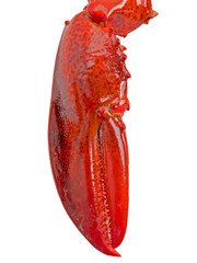 lobster claw isolated on white